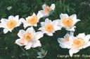 Passion Nature - Fleurs