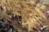 Passion Nature - Algues