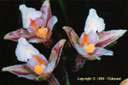 Passion Nature - Orchidées